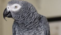 Forcing your parrot into her cage when you're late for work is not the way to build a trusting relationship. Try these tips instead.