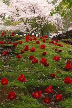 Japanese Garden in Kyoto , Japan