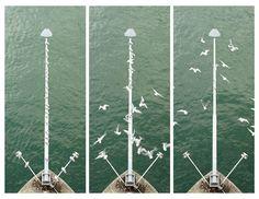 Gulls on the River Rhein