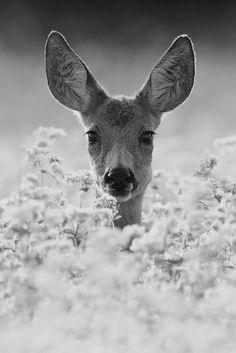 """""""Doe.... A deer....a female deer"""""""