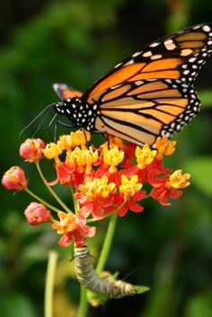This site has great info that will attract butterflies to your garden.