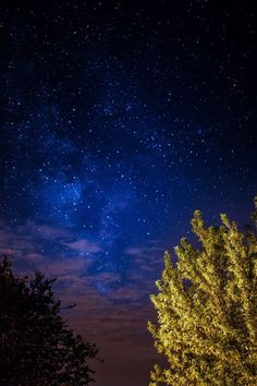 Kaboompics - Free High Quality Photos - A trees under the starry sky