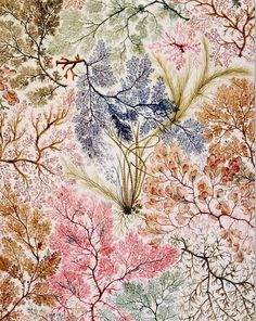 Textile design by William Kilburn