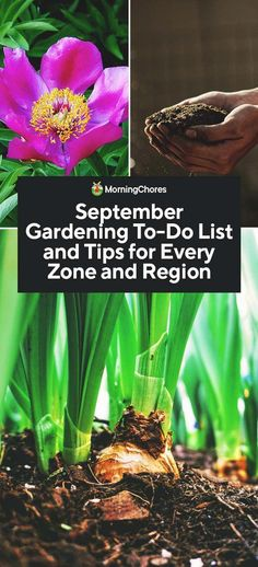 Urban Garden September Gardening Tips and To-Do List by Planting Zone and Region - Although your September gardening to-do list is quite a mouthful; we will help you stay on top of it all here with our zone and region guide. Organic Vegetables, Growing Vegetables, Growing Plants, Plant Zones, Organic Gardening Tips, Vegetable Gardening, Urban Gardening, Flower Gardening, Flowers Garden
