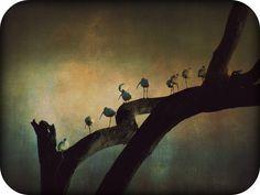I Walk the Line by amieww, via Flickr