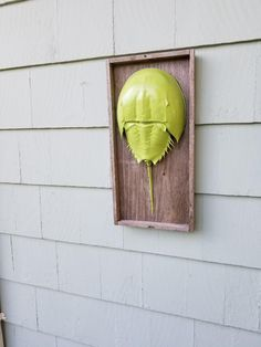 Candy Apple Green Horseshoe Crab Sign,Green Horseshoe Crab Wall Hanging,Rustic Green Crab Wall Hanging,One of a Kind Sign, Beach Barn A by BeachBarnArt on Etsy Candy Apple Green, Crab Art, Crab Shells, Horseshoe Crab, Beach Gifts, Shell Art, Candy Apples, Rustic Walls, Crabs