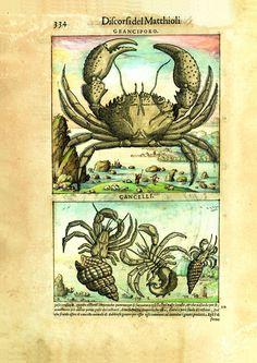 I discorsi di P.A. Mattioli. L'esemplare dipinto da Gherardo Cibo: eccellenza di arte e scienza del Cinquecento