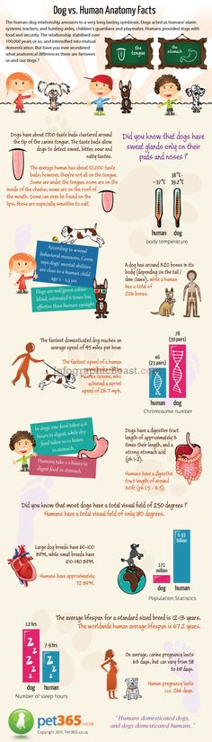 Infographic Dogs VS Humans