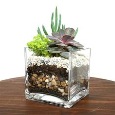 Pflanzideen Würfel-Sukkulenten-Terrarium-Kit You do need to inspect the item closely to be sure it's Succulents In Containers, Cacti And Succulents, Planting Succulents, Cactus Plants, Propagate Succulents, Indoor Cactus, Cactus Art, Mini Cactus Garden, Cactus Decor