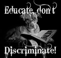 Pitbull Facts, Dog Shaming, Dog Training, Pitbulls, Dog Cat, Puppies, Education, Pets, Movie Posters