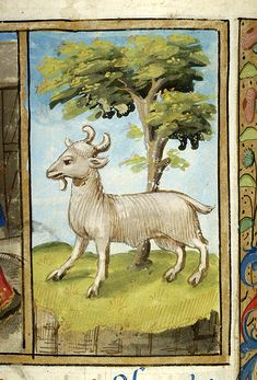 - Images from Medieval and Renaissance Manuscripts - The Morgan Library & Museum Aries Art, Zodiac Art, Medieval Manuscript, Medieval Art, Illuminated Letters, Illuminated Manuscript, Renaissance, Traditional Artwork, Morgan Library