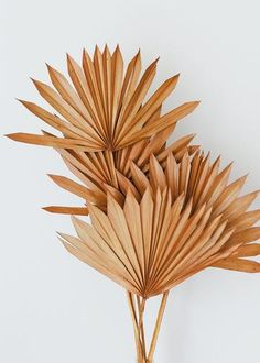 Find tropical dried leaves, like these stunning rustic orange sun palm leaves. Add to a vase, and bring a boho chic look to your decor. Terracotta Orange Tall x Wide Dried 5 per Bunch Each Sun Palm is natural and unique, sizes and colors may vary. Tropical Flowers, Tropical Leaves, Exotic Flowers, Purple Flowers, Silk Flowers, Artificial Palm Leaves, Silk Orchids, Boho Wedding Decorations, Dry Leaf