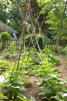 Simple Cucumber Trellises  #cucumber #trellis #DYI #chiotsrun @Susy Koujak Morris - I LOVE these; hoping to get some bundles this next week to have on hand!