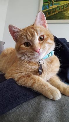 Im so happy that I adopted this handsome guy by Sonoriously cats kitten catsonweb cute adorable funny sleepy animals nature kitty cutie ca