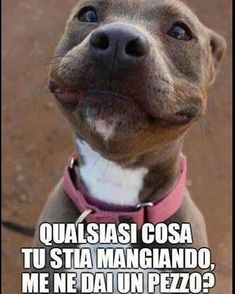 Funny Animal Memes, Cat Memes, Funny Dogs, Funny Animals, Cute Animals, I Love Dogs, Cute Dogs, Funny Images, Funny Pictures