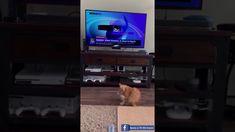 Romania Faze Tari și Super Tari - Reacția unei Pisici la anunțul lui Kla... Romania, Entertainment, Youtube, Free, Crown, Youtubers, Youtube Movies