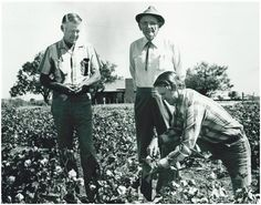This is my father in law, his father and grandfather. 3 generations of William Bland Harrisons farming in Stamford, Tx. This picture was on the home page of Texags.com with an artical about them. Great men!