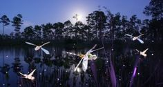 """Dragonflies-4 from Jason D. Page. """"My name is Jason D. Page and I am a light painter. LightPaintingPhotography.com was born out of my passion and obsession with light painting photography."""""""