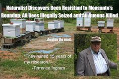 Illinois illegally seizes bees resistant to Monsanto's Roundup I find this very disturbing. Monsanto apparently owns the local authorities there. Too much power in ethically questionable hands. Just Say No, Bad Food, Environmental Issues, Ms Gs, Bee Keeping, 15 Years, In This World, Awakening, Illinois