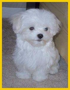 He is Lewy, my beautiful pet!