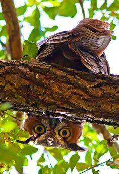 (via Nature - Beautiful Birds / hello)
