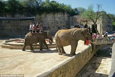 San Antonio Zoo (pictured) in Texas is No6 on the In Defense of Animals list of worst zoos in North America. The zoo has just one elephant now, called Lucky