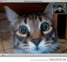 The cat's face when he saw his owner on video chat. Haha! This was Rajah's reaction when he saw Matt on Skype, and then started looking behind the computer to figure out where the hell he went.
