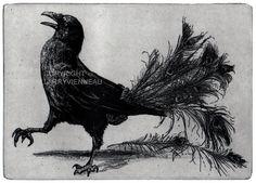 Raven artwork , Raven, crow,  black bird,  Peacock, Aesop Fables,  etching