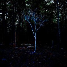 Тут наверное светоотражающая краска. На тоненьком дереве хорошо, так это хрупко смотрится. Прямо патронус Barry Underwood
