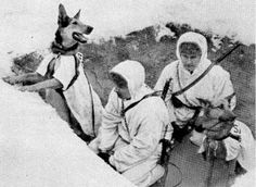 Signal dogs of Finnish Army were used carry messages there where phone lines were out of order. February 1940, winter war. Pin by Paolo Marzioli