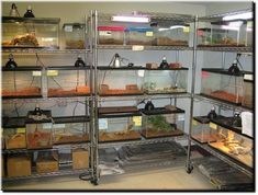 reptile room...We're almost there!!