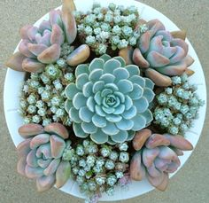Nice combination of succulents