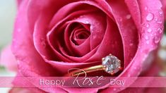 Rose Day is on the first day of Valentine week i.e on February 7 on every year. On this special Rose day lovers greet other with beautiful red roses .Also one can give rose to … Happy Rose Day Wallpaper, Rose Wallpaper, Screen Wallpaper, Wishes For Friends, Day Wishes, Flower Pictures, Pictures Images, Love Rose Images, Rose Day Pic