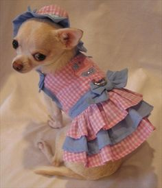 Little Cupcake Cutie Dog Harness Dress 4 Piece Set - Dress, Hat, Leash and Panties-Back in Stock!
