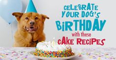 Celebrating birthdays and important anniversaries is a long-time tradition for families. And, since dogs are, without a doubt, a member of the family, celebrating a birthday, 'gotcha day,' or adoption...