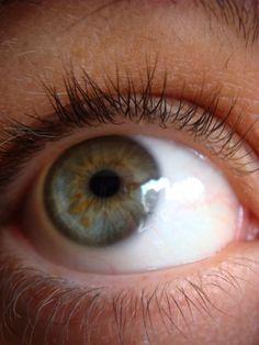 True Spring eye