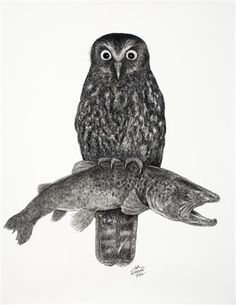 Morepork with Trout, Charcoal on paper, x Trout, Charcoal, Owl, Bird, Gallery, Paper, Artist, Animals, Imagination