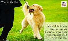 Weight Waggers - the benefits of walking for your dog #dog #walk #health