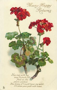 Geraniums - Most known are annuals but there are ways to overwinter and also some hardy varieties.