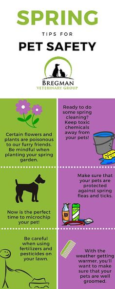 Bregman Veterinary Group: How to Start Spring Off on the Right Foot (or paw)