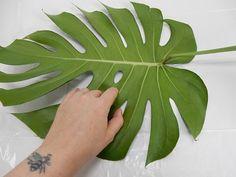 Plaats een Monstera deliciosa blad op een vlakke ondergrond