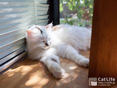 CatLife猫写真壁紙 2014年9月