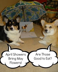 Corgi Comics, April Roundup: See what you might have missed!