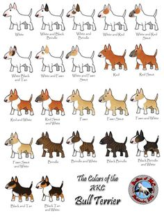 I'll take one of each :) #bull #terrier #colors