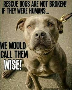 I can't understand this. Shelter animals are only there because of people. There is absolutely nothing wrong with them. They are full of love, affection, and joy❣️
