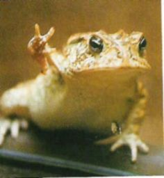 Frog calls for peace. Obey him.