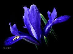 Midnight Blue(s) ... by Herbert Pregel on 500px