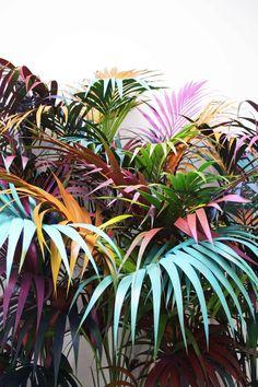 Ana Beltra, Colored jungle •