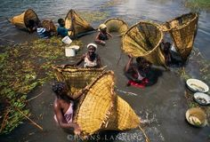 Hambukushu people fishing with baskets, Okavango Delta, Botswana. Fishing Girls, Women Fishing, People Around The World, Around The Worlds, Frans Lanting, Destinations, Okavango Delta, African Models, African Tribes