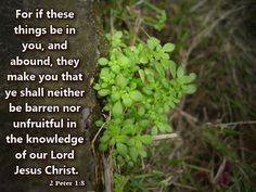 2 Peter 1:8